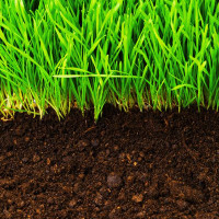 Your lawn is hungry... Feed it... Now is the time for Spring Fertilizer!