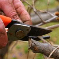 Winter pruning-benefits A to Z Yard and Cleaning