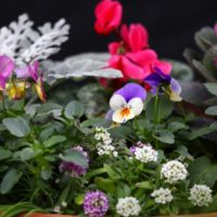 Fall Gardening Part 2: Hardy Container Gardens and Edibles